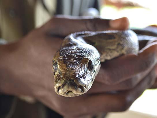 Meserani Snake Park Tour